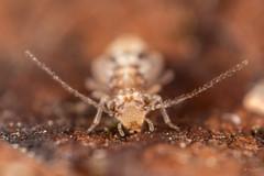 Any held with ID please (Shane Jones) Tags: bug wildlife nature macro macrolife macrophotosnolimits macrolicious nikon d810 kenkotelepluspro300tc14 pk3extensiontube pk3x2 24mmf28reversed