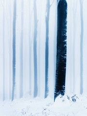 Lines (Pavel Cervenka Photographer) Tags: tree forest wood winter abstract minimal fog nature detail snow velkajavorina strani moravia freeze pavelcervenka czechrepublic canon eos100d ef50