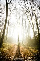 En pleine lumière - In bright light (Sylvain Paligot - Captures de lumières) Tags: mist brume brouillard fog lever sunrise trees forêts forest arbres hiver
