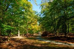 Forest road - Waldweg (b_kohnert) Tags: bäume trees waldweg forestroad wald forest landscape landschaft nature natur