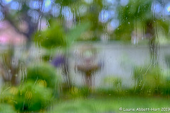 "20190221  ODC22783-Edit (Laurie2123) Tags: fujixt2 fujinon56mm laurieturnerphotography laurietakespics laurie2123 odc ourdailychallenge backyard ""photographic impressionism abstract impresionistic blury rain"