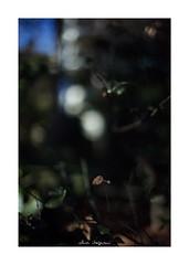 2019/1/26 - 6/15 photo by shin ikegami. - SONY ILCE‑7M2 / Voigtlander NOKTON CLASSIC 40mm f1.4 SC VM (shin ikegami) Tags: asia sony ilce7m2 sonyilce7m2 s7ii 40mm voigtlander nokton nokton40mmf14sc tokyo photo photographer 単焦点 iso800 ndfilter light shadow 自然 nature 玉ボケ bokeh depthoffield naturephotography art photography japan earth