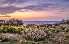 Back Beach Sunset (David Hamments) Tags: sunset v1 bunbury backbeach ngc flickrunitedaward