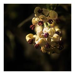 white winter blossom (Mallybee) Tags: fuji fujifilm xt30 apsc xtrans xmount mallybee fujinon 18135mm ois zoom f3556 blossom flower winter outside white purple