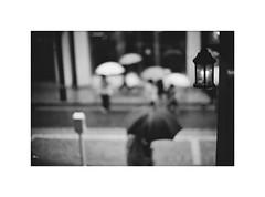 *March, In the early spring rain. (niko**) Tags: leica leicam2 noctilux50mmf10 e60 builtinhood ilford xp2400 135 35mm filmphotography yokohama