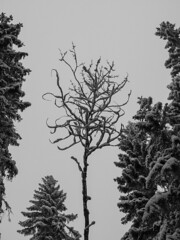 Forest flower  #Finland #nature #forest #trees #winter #snow #cold #white #blackandwhite #bnw #bnwphotography #bnw_captures #bnwmood #bnw_life #bnw_planet #bnw_greatshots #monochrome #outdoors #photography #olympus #travel #instamoment #picoftheday #photo (Zilvinas Degutis) Tags: photooftheday forest nature olympus winter cold bnw trees bnwlife picoftheday bnwplanet white blackandwhite outdoors bnwmood instamoment snow bnwgreatshots finland monochrome bnwphotography bnwcaptures travel photography