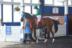 "2017-09-09 (16) r4 Jenn Miller on #7 Crossing the Blues (JLeeFleenor) Tags: photos photography md maryland marylandracing laurelpark equine marylandhorseracing jockey جُوكِي ""赛马骑师"" jinete ""競馬騎手"" dżokej jocheu คนขี่ม้าแข่ง jóquei žokej kilparatsastaja rennreiter fantino ""경마 기수"" жокей jokey người horses thoroughbreds equestrian cheval cavalo cavallo cavall caballo pferd paard perd hevonen hest hestur cal kon konj beygir capall ceffyl cuddy yarraman faras alogo soos kuda uma pfeerd koin حصان кон 马 häst άλογο סוס घोड़ा 馬 koń лошадь outside outdoors paddock"