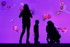 Strange Things (FX-1988) Tags: ripleys aquarium canada jellyfish toronto water underwater people animals