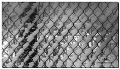 MARCH 2019 NGM_0582_7188-1-222 (Nick and Karen Munroe) Tags: fence fenceline fences chainlink chainlinkfence snow snowfall snowstorm snowy wintry winter winterwonderland heartlakeconservationarea heartlakeconservation heartlakepark heartlake conservationarea conservation karenick23 karenick karenandnickmunroe karenandnick munroe karenmunroe karen nickandkaren nickandkarenmunroe nick nickmunroe munroenick munroedesigns photography munroephotoghrpahy munroedesignsphotography nature landscape brampton bramptonontario ontario ontariocanada outdoors canada d750 nikond750 nikon nikon2470f28 2470 2470f28 nikon2470 nikonf28 f28 blackandwhite bw blackwhite bandw monochrome mono