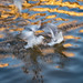 Intentional blur practice