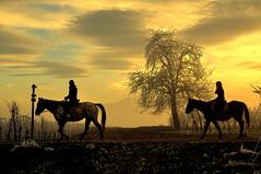 Promenade hivernale (Nathery Reflets) Tags: hiver givre chevaux rosenwiller basrhin alsace crépuscule paysage nuage ciel arbre