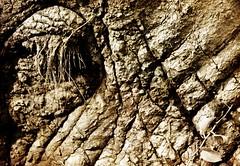 Plein la vue... (Sabine-Barras) Tags: africa afrique animal éléphant elephant wildlife sepia sépia monochrome skin peau oeil eye lignes lines detail détail