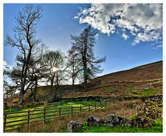 Up the hill! (john.methven) Tags: loch melfort hill hillside scenic scotland tree clouds