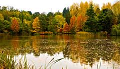AUTUMN COLOURS (chris .p) Tags: nikon d610 view worcestershire autumn arboritem uk 2018 october capture colours reflection trees