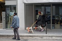 DSC03620.jpg (fdc!) Tags: mammifères 75paris 75011 nature lesgens vertébrés chiens animaux france paris chien compagnie compagnon iledefrance instagramphotoderueconcoursreponsephotoinstagoodinstalike toutou toutous