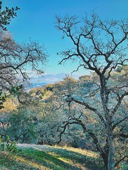"""Through The Oaks To The Mountain"" (bradhodges09) Tags: landscapes scenics openspace blueskies oaktrees oaks oak mountain"