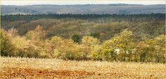 Sur les hauteurs de Hamoir, Province de Liège, Belgium (claude lina) Tags: claudelina belgique belgium belgië hamoir provincedeliège landscape paysage bois forêts