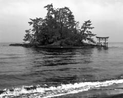 The Koiji (path of love) beach (lebre.jaime) Tags: japan kanazawa notopeninsula tree sea torii hasselblad distagon cf4050fle kodak tmax100 tmx pb pretobranco blackwhite bw noiretblanc mf mediumformat film film120 analogic