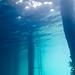 Flinders Pier Underwater-3