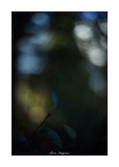 2019/1/14 - 2/9 photo by shin ikegami. - SONY ILCE‑7M2 / Voigtlander NOKTON CLASSIC 40mm f1.4 SC VM (shin ikegami) Tags: 井の頭公園 マクロ macro 吉祥寺 winter 冬 asia sony ilce7m2 sonyilce7m2 s7ii 40mm voigtlander nokton nokton40mmf14sc tokyo photo photographer 単焦点 iso800 ndfilter light shadow 自然 nature 玉ボケ bokeh depthoffield naturephotography art photography japan earth