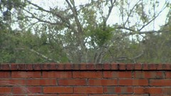 Rain on brick wall (Ricardo's Photography (Thanks to all the fans!!!)) Tags: video b roll anthem park florida nature sony saintcloudfl centralflorida cinematic videolibrary freevideos 1080pvideos 1080p freefootage footage sonyvideos