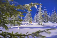 Heaven! (petrapetruta) Tags: bokeh winter landscape winterscape dog industar61lz colorful blue