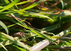 Spider (Roberto_Mosca) Tags: spider pentax k1 100mm macro