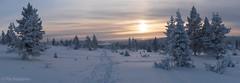 Winterland (Pia Räisänen) Tags: tunturi lappi lapland fell snow pallasylläs pallas panorama landscape winter