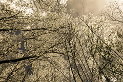 _DSC0030 (Geert Van Keymolen) Tags: 2018 belgien belgique belgium belgië d5200 erpemere europe nikon nikond5200 arbre baum bois boom buitenshuis color couleur draussen exterieur farbe forest forêt kleur natur nature natuur outdoor tree wald vlaanderen be