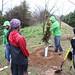 Ayrsley_Tree_Planting_2019_ (27)