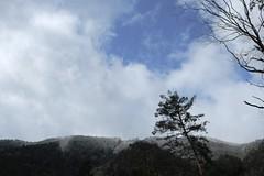 tree canopy (ababhastopographer) Tags: treecanopy kyoto kuramayama kibuneyama winter afternoon skyline ridgeline treetop ridge earlyspring 京都 鞍馬山 貴船山 冬 早春 空 雲 稜線 尾根 梢 樹冠
