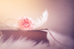 Be soft (Ro Cafe) Tags: lensbaby selectivefocus sol45 sonya7iii carnation feather macrofilterskit oldbooks pastelcolors pink soft stilllife naturallight textured