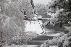 It Snowed in the Neighborhood (arbyreed) Tags: arbyreed snow winter cold snowing trees snowfilledtrees snowfall loadedtrees