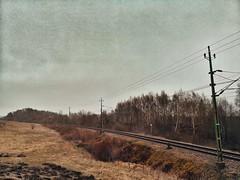 Train tracks (WhiteAnGeL <3) Tags: traintracks nature naturreservat reservat sweden halland grass field forest skog äng gräsäng huaweicamera cellphonecamera mobilkamera huaweikamera himmel sky naturereservation