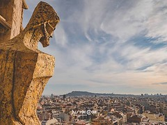 In this picture you can see the city Barcelona, this was taken from the very top of the sangrada familia. Follow for more · · · · · #instatravel #travelblogger #barcelona_world #barcelona_turisme #travel #travels #traveler #wanderlust #barcelona #igersbar (justin.photo.coe) Tags: ifttt instagram in this picture you can see city barcelona was taken from very top sangrada familia follow for more · instatravel travelblogger barcelonaworld barcelonaturisme travel travels traveler wanderlust igersbarcelona photooftheday traveller barcelonainspira spain travelling travelphotography barcelonaexperience travelgram barcelonalife visitbarcelona photography travelblog catalunya barcelonagram traveling bcn barcelonalovers barcelonacity justinphotocoe