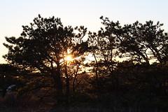 Sunlit Trees (NatureChaserPhotos) Tags: marconi wellfleet capecod trees sunset beach dune dunegrass sky ocean nature