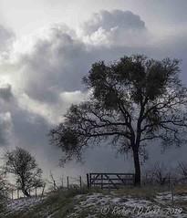 Oak, Gate, Storm (rbeebephoto) Tags: mariposaco bearvalleyrd â©richarddbeebe2019 cricharddbeebe2019 crichardbeebe2019 presidentsday feb february snow sky clouds oaktrees storm 2019 k5 pentaxdslr tamronxrdiii18200mmf3563 winter