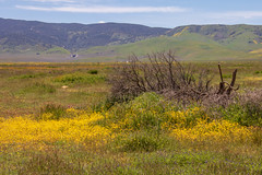 View at Goodwin Center (Teresa_J) Tags: carrizo plain national monument apr 2019