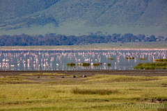 Calm morning, Ngorongoro crater, Tanzania (KronaPhoto) Tags: safari birds fugler lake sea vann water reflection travel africa tanzania ngorongoro nationalpark pink view crater canon flamingo gardenofeden edenshage