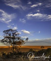 _IO_8411-Panor1 (oalard) Tags: australia australie westernaustralia panorama red desert sky cloud