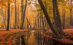 Autumn forrest (Mario Visser) Tags: autumn voorstonden color forrest water reflections tree orange light fog