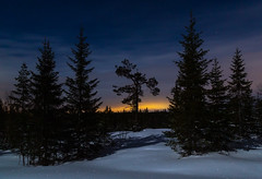 Moonlit landscape (tods_photo) Tags: landscape moon sunset stars night trees spruce pine snow winter yellow cold