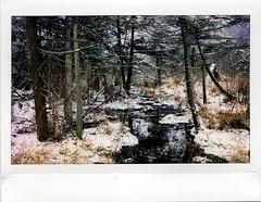 (babireley) Tags: fujifilminstaxwide instaxwide300 instantfilm pawilds pottercounty pa pottercountypa winter snow
