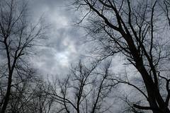 Winter Clouds Trees And Sun (Modkuse) Tags: provia fujiprovia fujifilmxt2provia fujifilmxt2proviasimulation nature natural clouds sun trees treescape sky skyscape wintersky winter wintercolor art artphotography photoart fineartphotography fineart fujifilm fujifilmxt2 xt2 xf1855mmf284rlmois fujinon fujinonxf1855mmf284rlmois wideangle