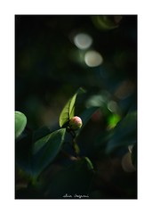 2019/2/2 - 3/15 photo by shin ikegami. - SONY ILCE‑7M2 / Lomography New Jupiter 3+ 1.5/50 L39/M (shin ikegami) Tags: asia sony ilce7m2 sonyilce7m2 a7ii 50mm lomography lomoartlens newjupiter3 tokyo sonycamera photo photographer 単焦点 iso800 ndfilter light shadow 自然 nature 玉ボケ bokeh depthoffield naturephotography art photography japan earth