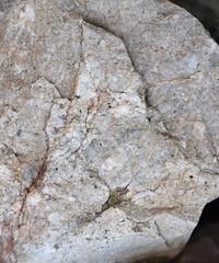 DSC_9201 (jgdav) Tags: ancient macro rock granite image pigment america petroglyph