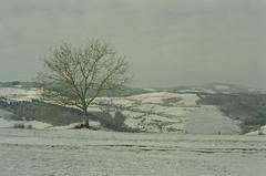 Arbre (leniners) Tags: 2018 france rhone silbersalz35 leica m6 leicam6 saintmarcelléclairé saint marcel eclaire neige snow