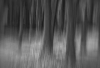 . . . icm woods