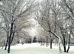 Wintry Walks (Mr. Happy Face - Peace :)) Tags: winter snow trees walks alberta canada cans2s art2018 parks