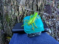 Grasshopper geocache (Morton Fox) Tags: hatfield pa geocaching geocache